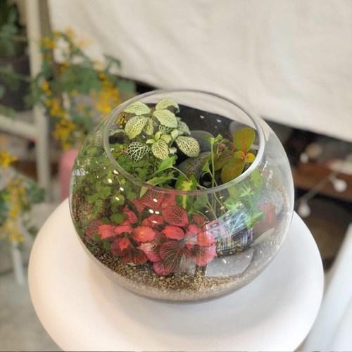 [텐텐클래스] (고양) 유리볼 미니 정원 (테라리움 원데이 클래스)