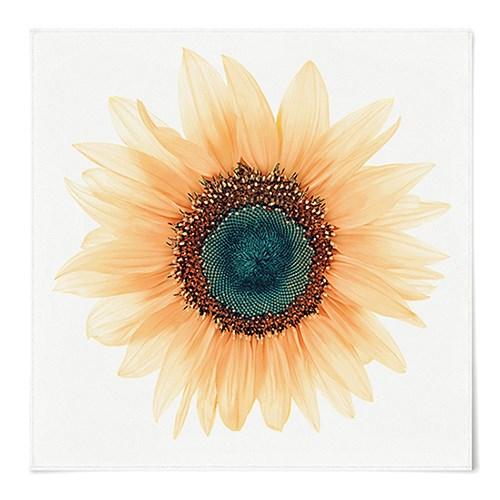 패브릭 포스터 S079 식물 꽃 그림 액자 보석 해바라기