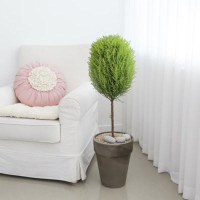 플라랜드 공기정화식물 율마 독일토분 인테리어화분