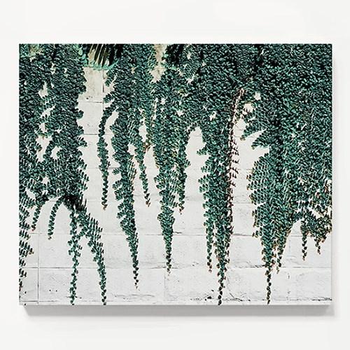 캔버스 보테니컬 식물 풍경 인테리어 액자 덩굴
