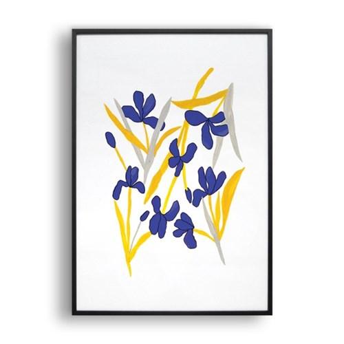 붓꽃 (White)