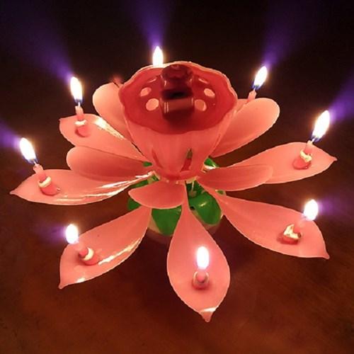 회전하는 멜로디 생일파티 연꽃초