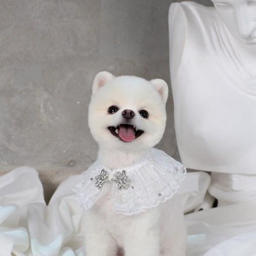 에덴숑-Ange cape - White(앙쥬 케이프)