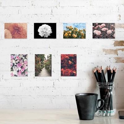 사랑스러운 장미 7종 사진세트