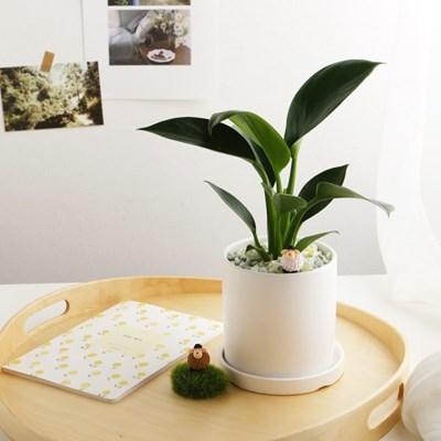 공기정화식물_콩고+피규어