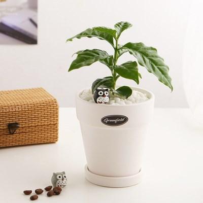 공기정화식물_커피나무+피규어