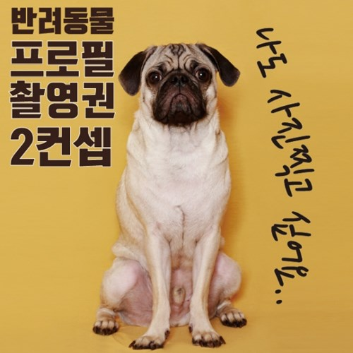 [홍대 아이스튜디오] 반려동물 프로필 사진 촬영권 2컨셉