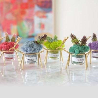 [5개세트]순록가족 스칸디아모스 화분-공기정화식물, 천_(100807374)