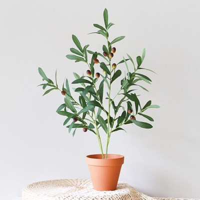 올리브 그린 나무 갈색토분(13호) 세트