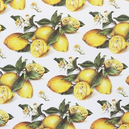 따소띠_ 1698 (레몬)_(1421458)