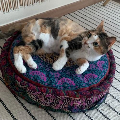 보헤미안 강아지 & 고양이 방석 3종