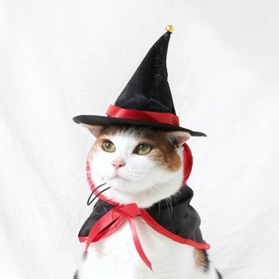 고양이 강아지 마법사 모자 망토 옷 세트 할로윈 코스튬 miyopet