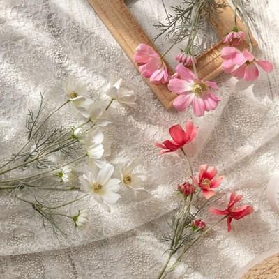 로맨틱 플라워 코스모스 3color
