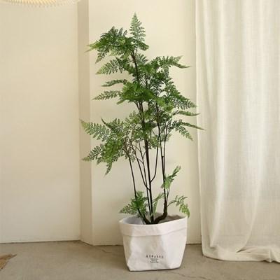 리데리 고사리 조화나무