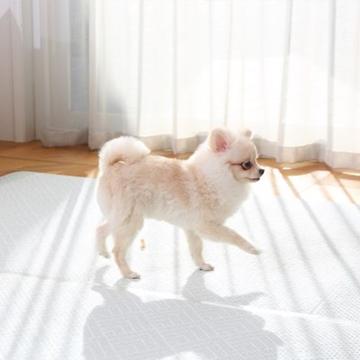 리빙코디 PVC 애견매트 강아지매트 /슬개골 탈구예방