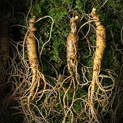 명절선물세트/ 하늘나리 9-10년근 산양산삼 3뿌리