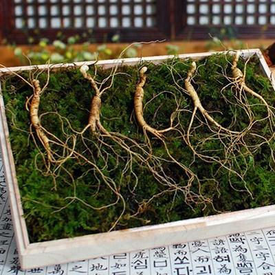 명절선물세트/ 하늘나리 9-10년근 산양산삼 5뿌리