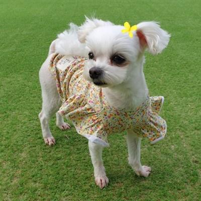 나비소녀블라우스 강아지옷 편안한 면티셔츠 애견실내복