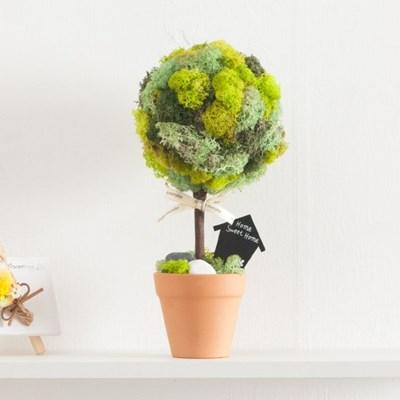 스칸디아나무토분set 30cmP 공기정화 식물 스칸디아모스_(1720311)