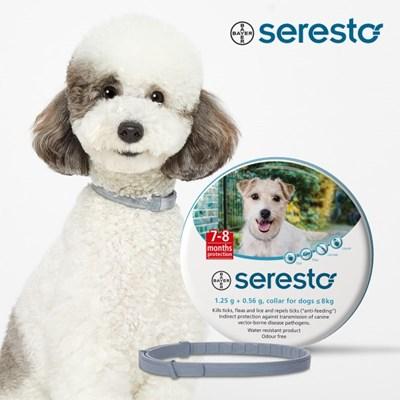 세레스토 강아지 진드기 방지 목걸이 8kg 미만용