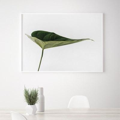 드림몬스테라 식물 액자 나뭇잎 인테리어 그림