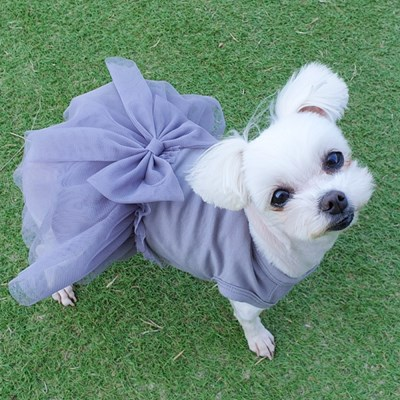 실켓드레스 활동성과 귀여움을 모두 갖춘 발레복 강아지원피스
