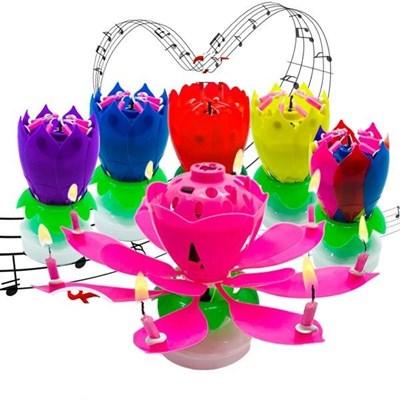 생일파티 케이크 이벤트 멜로디 꽃초