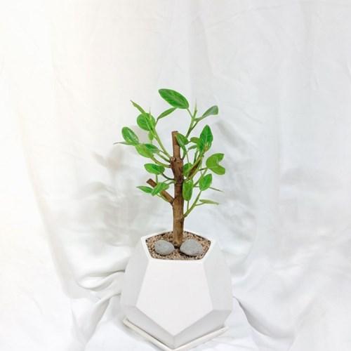 플라랜드 공기정화식물 가지 뱅갈고무나무 개업식물 집들이선물