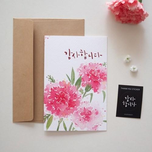 핑크 카네이션 카드