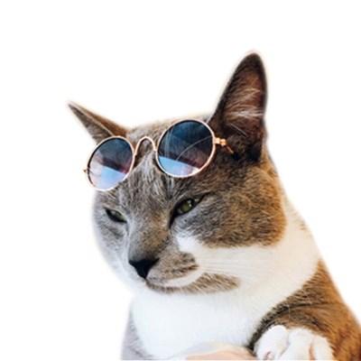 강아지 선글라스 고양이 냥글라스 애견 안경 햇빛차단 반려