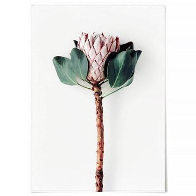 패브릭 천 포스터 F326 꽃 보테니컬 아트 액자 Proteus