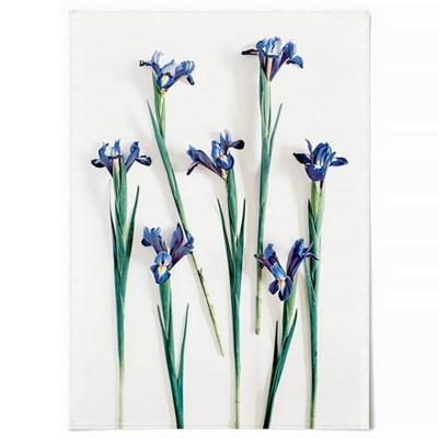 패브릭 포스터 F298 꽃 인테리어 그림 액자 아이리스