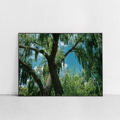 나무 (Tree)