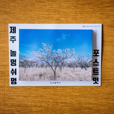 [손끝에서] 제주 놀멍쉬멍 포스트잇_벚꽃나무