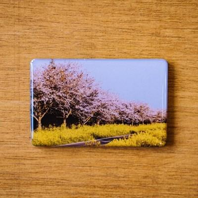 [손끝에서] 제주 놀멍쉬멍 마그넷_벚꽃동산