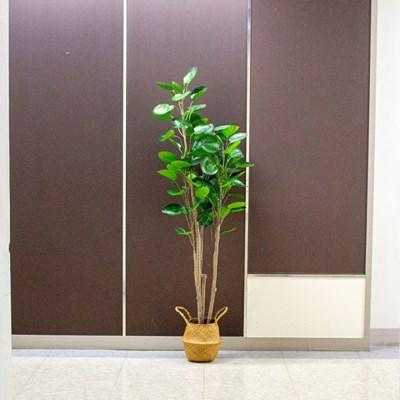 둥근잎 파비안 나무 조화 160cm