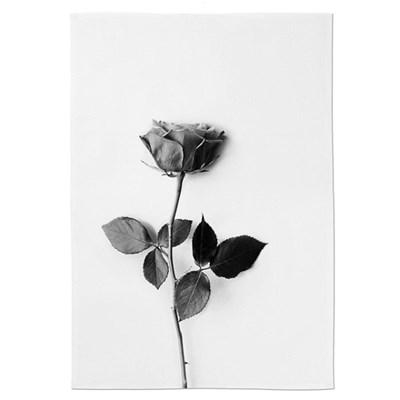 패브릭 포스터 인테리어 그림 액자 꽃 식물 로즈B