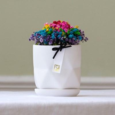 안개꽃화분 (2color)