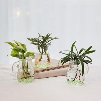 미니 홈카페 수경식물(소) 3종 택1
