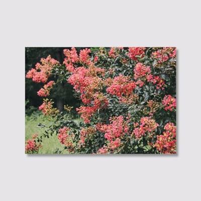 The scent of summer (5070 size) - Jitten 인테리어 포스터
