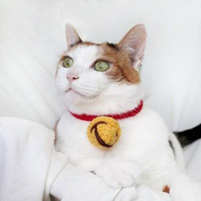 니트 방울 목걸이 넥카라 고양이 강아지 Miyopet