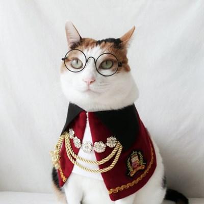 백작 공작 귀족 망토 고양이옷 강아지옷 할로윈 코스튬 Miyopet