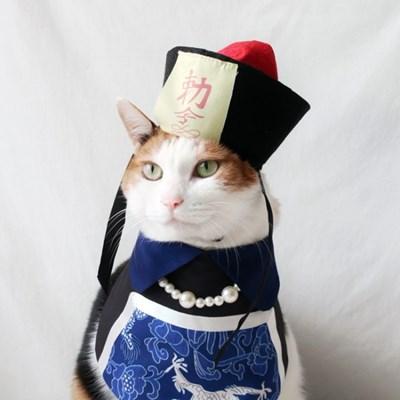 중국좀비 강시옷 모자 고양이옷 강아지옷 할로윈 코스튬 Miyopet