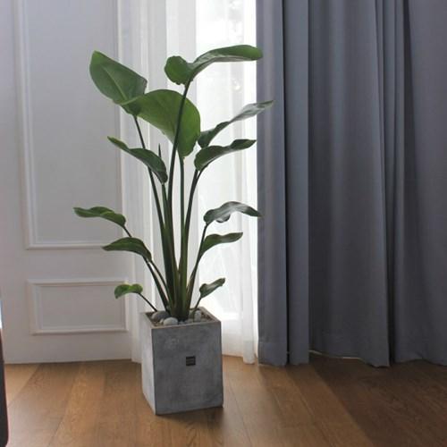 [거실좋은식물/화초배달]우아한 플랜테리어 정화식물 극_(1360260)