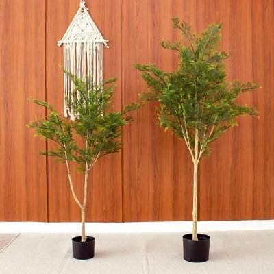 사계절 푸른 측백나무 조화 130cm 155cm
