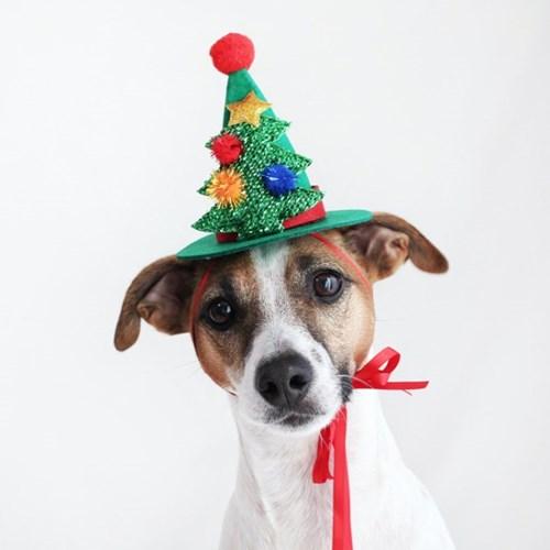 크리스마스 트리 모자 고양이 강아지 머리띠 선물  MIYOPET
