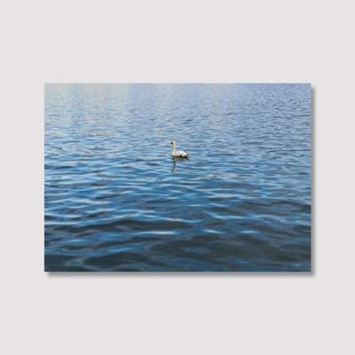 Swan Lake - Jitten 인테리어 포스터