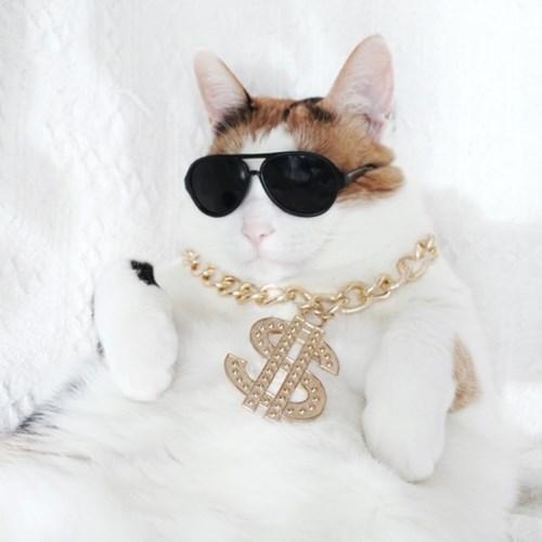 힙합 달러 목걸이 냥글라스 고양이 강아지 옷 할로윈 코스튬 MIYOPET