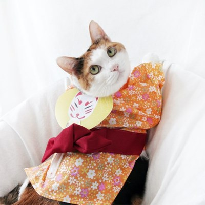 오렌지 유카타 기모노 고양이옷 강아지옷 설빔 할로윈 선물 MIYOPET