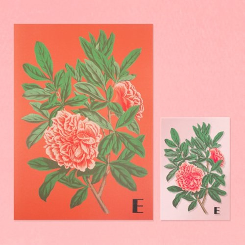 Faded Flower Poster & Clear Card (2type)